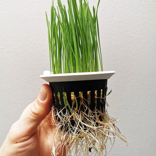 plant from inside aquaponics system