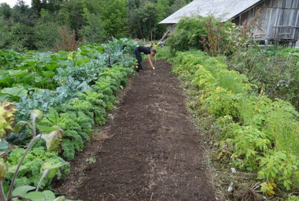 Urban Farm-It permaculture-farming-600x403 Permaculture Methods  urban grower sustainable food growing sustainability permaculture