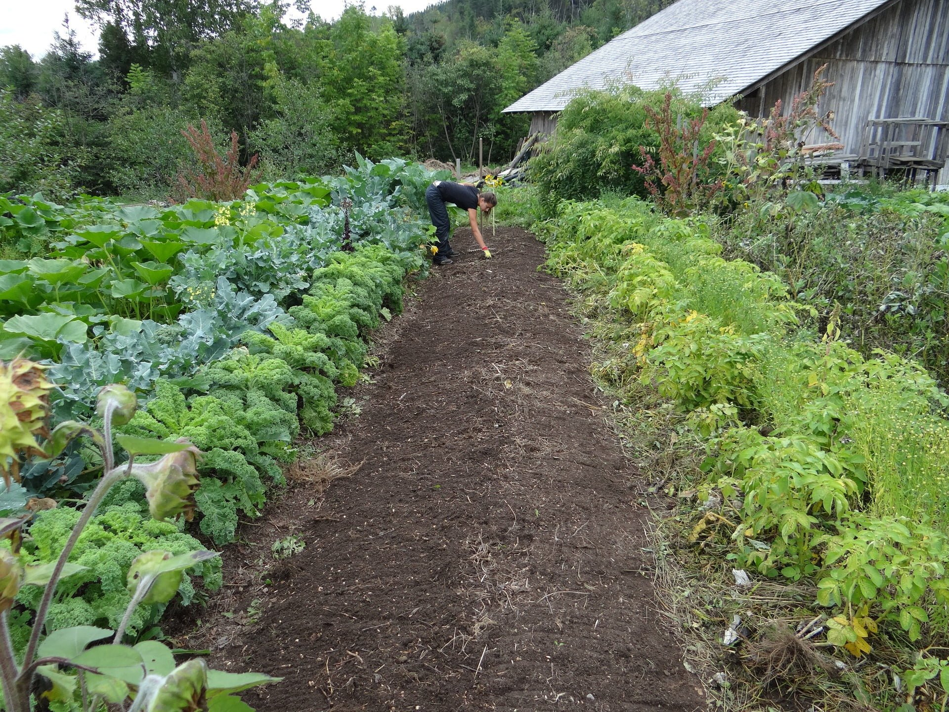Urban Farm-It permaculture-farming Permaculture Methods  urban grower sustainable food growing sustainability permaculture